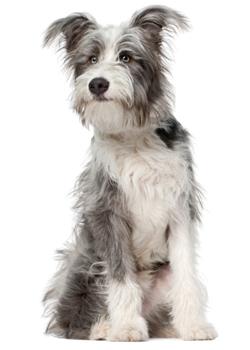 CaninePlan