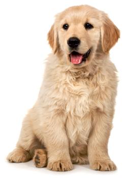 PuppyPlan